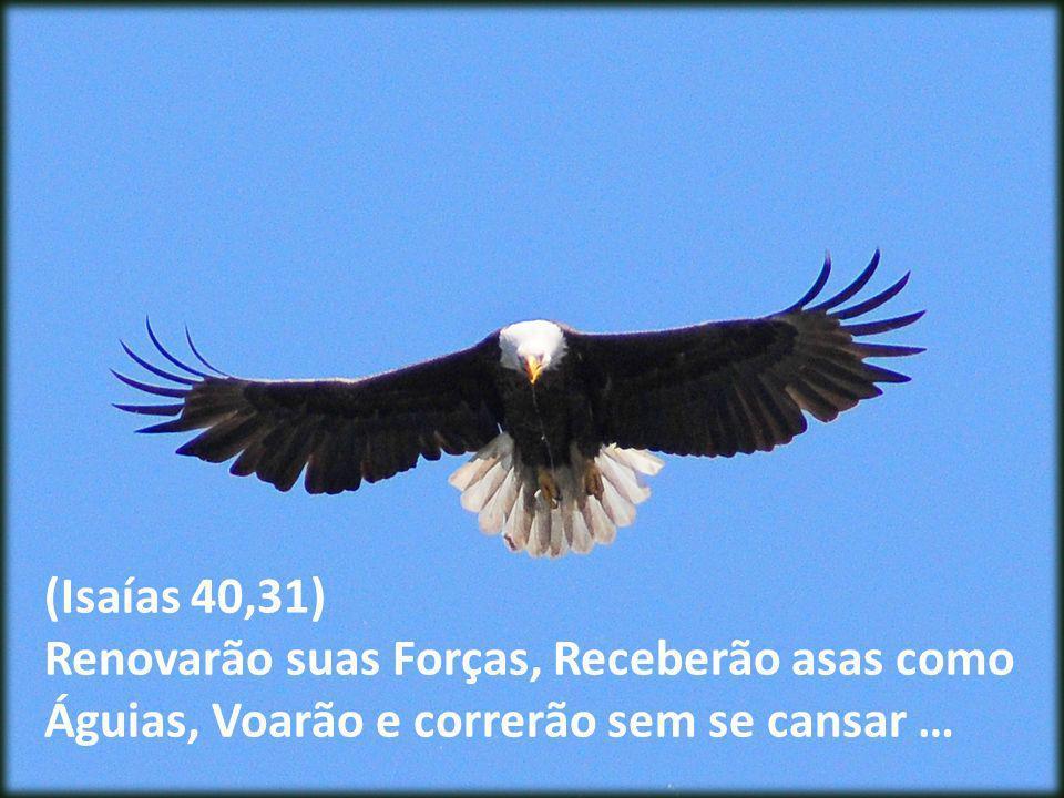 (Isaías 40,31) Renovarão suas Forças, Receberão asas como Águias, Voarão e correrão sem se cansar …