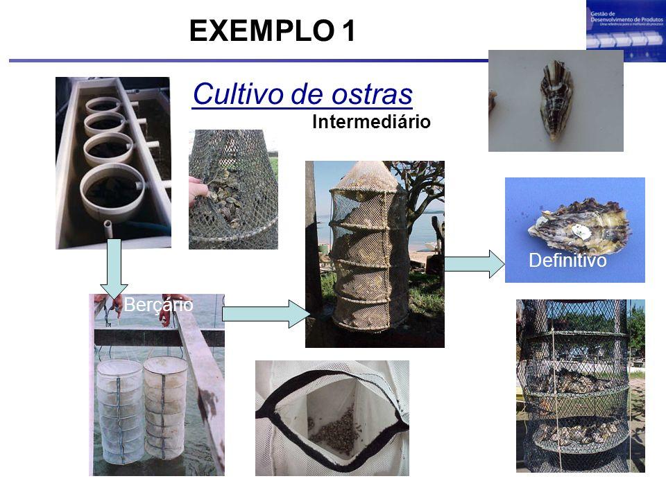 EXEMPLO 1 Cultivo de ostras Intermediário Definitivo Berçário