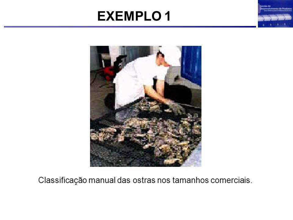 EXEMPLO 1 Classificação manual das ostras nos tamanhos comerciais.
