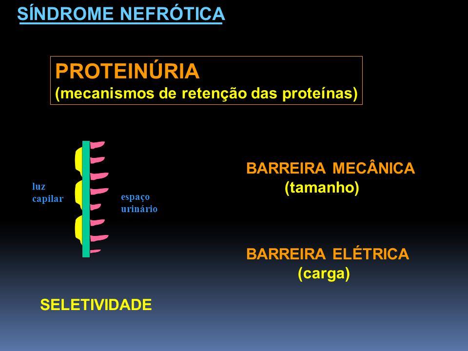 PROTEINÚRIA SÍNDROME NEFRÓTICA (mecanismos de retenção das proteínas)