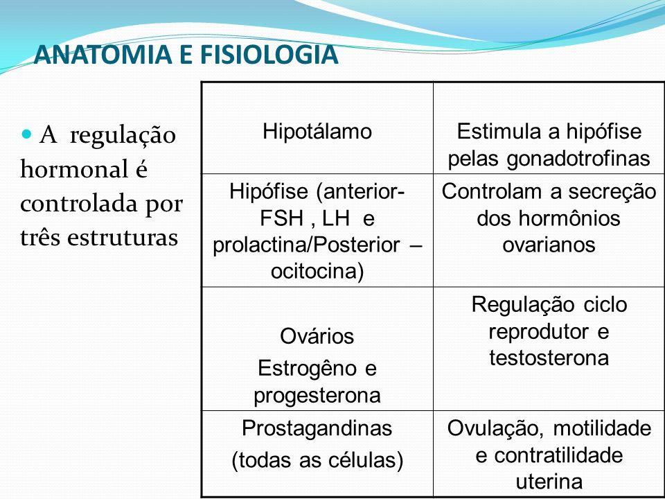 ANATOMIA E FISIOLOGIA A regulação hormonal é controlada por