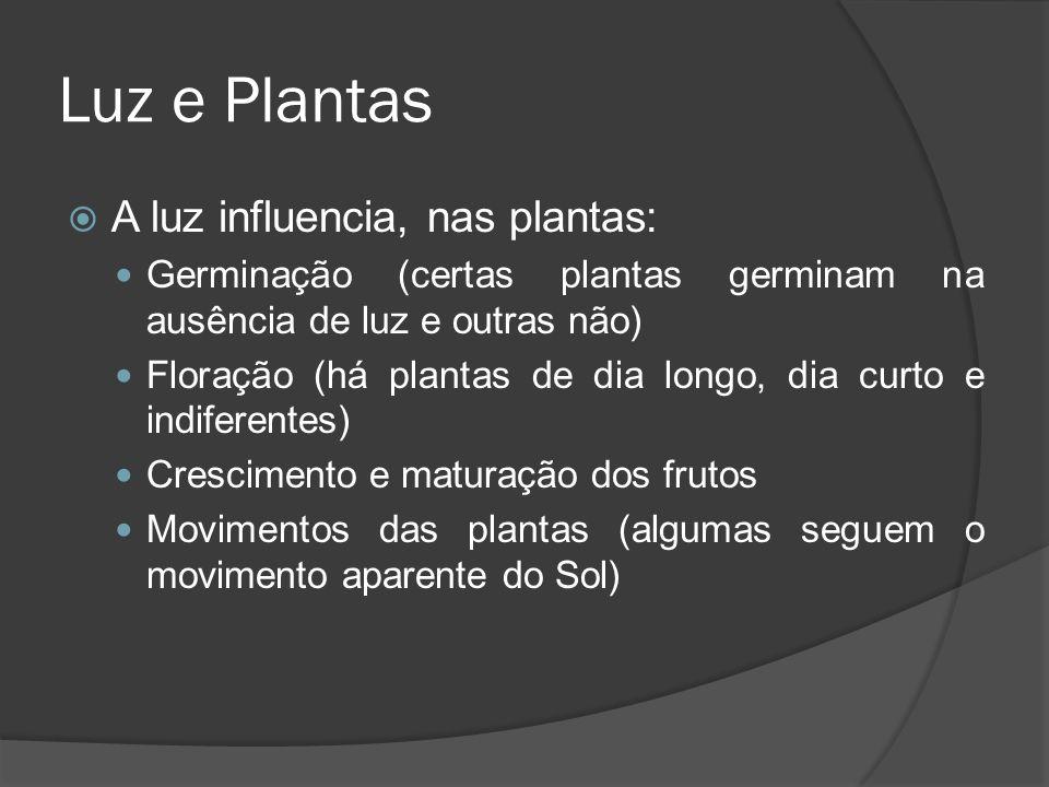 Luz e Plantas A luz influencia, nas plantas: