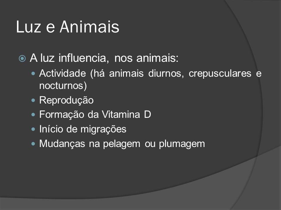 Luz e Animais A luz influencia, nos animais: