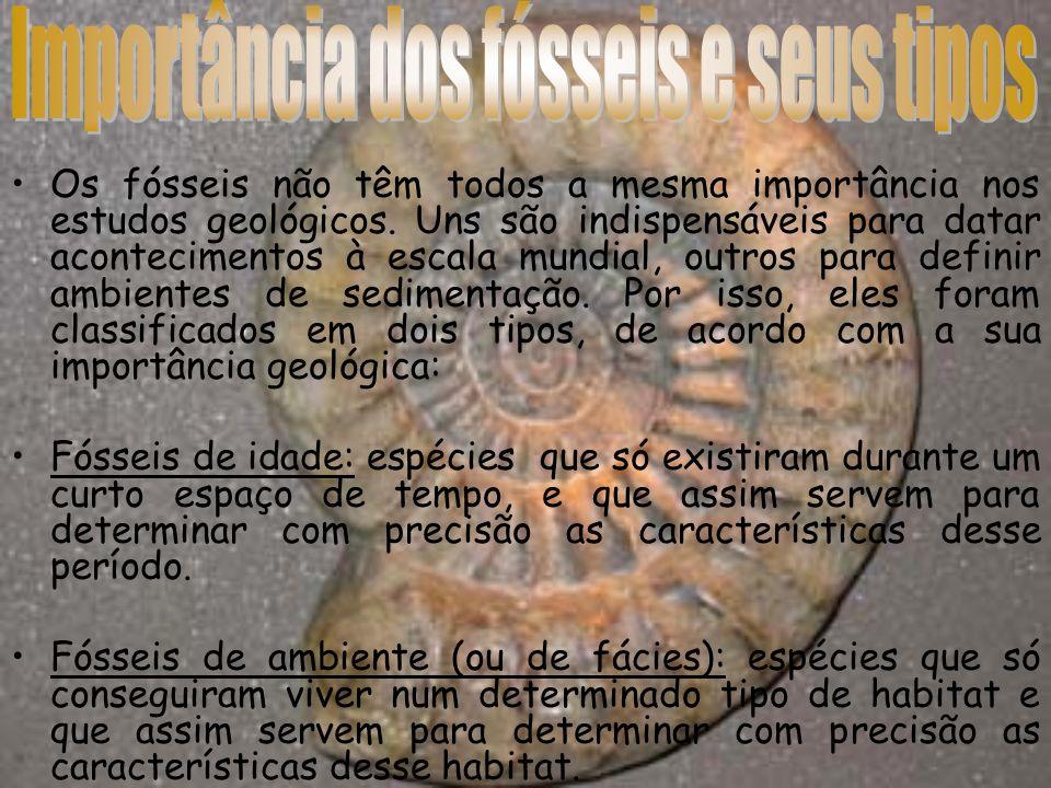 Importância dos fósseis e seus tipos