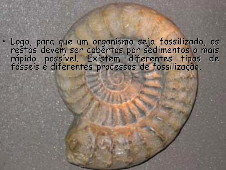 Logo, para que um organismo seja fossilizado, os restos devem ser cobertos por sedimentos o mais rápido possível.