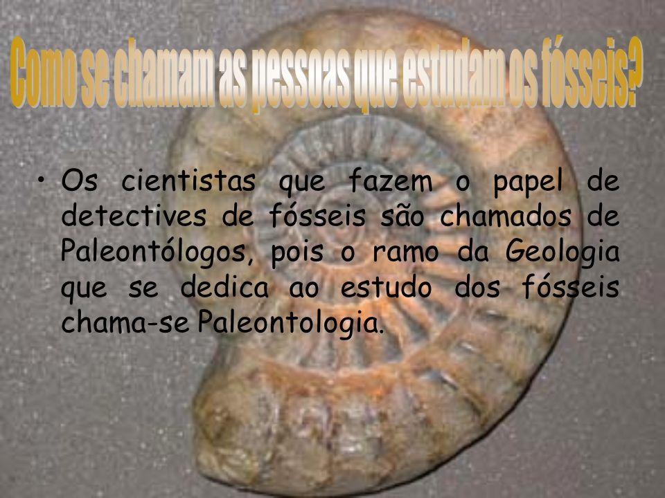 Como se chamam as pessoas que estudam os fósseis