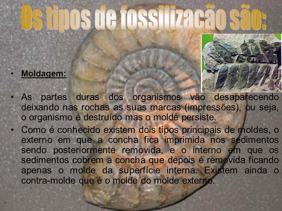 Os tipos de fossilização são: