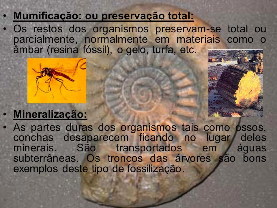 Mumificação: ou preservação total: