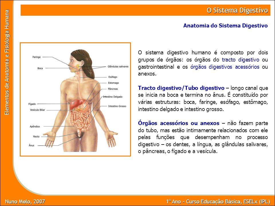 O Sistema Digestivo Anatomia do Sistema Digestivo