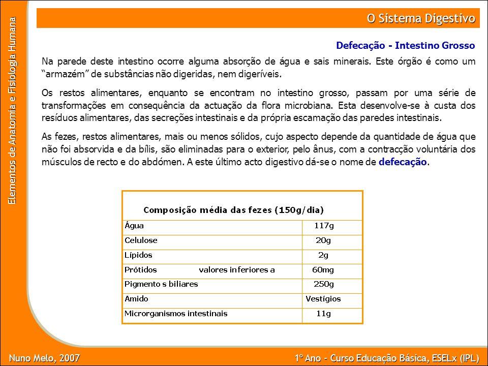 O Sistema Digestivo Defecação - Intestino Grosso