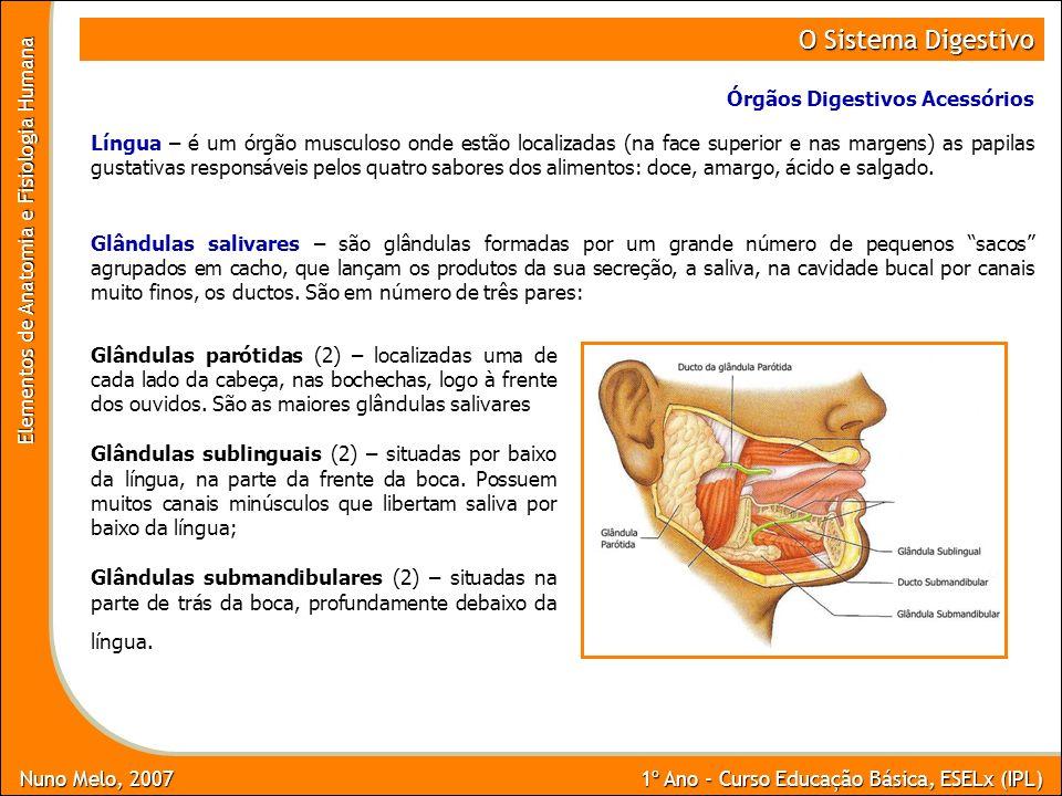O Sistema Digestivo Órgãos Digestivos Acessórios
