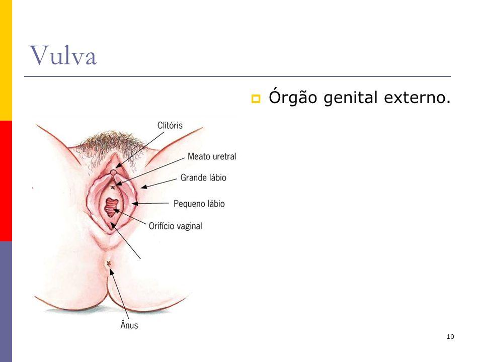 Vulva Órgão genital externo.