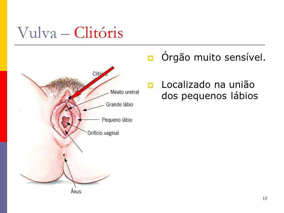 Vulva – Clitóris Órgão muito sensível.