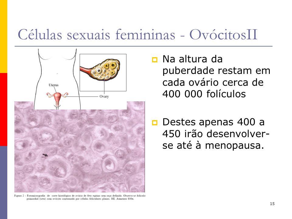 Células sexuais femininas - OvócitosII