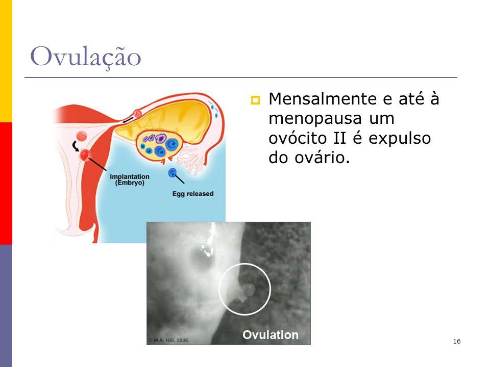 Ovulação Mensalmente e até à menopausa um ovócito II é expulso do ovário.