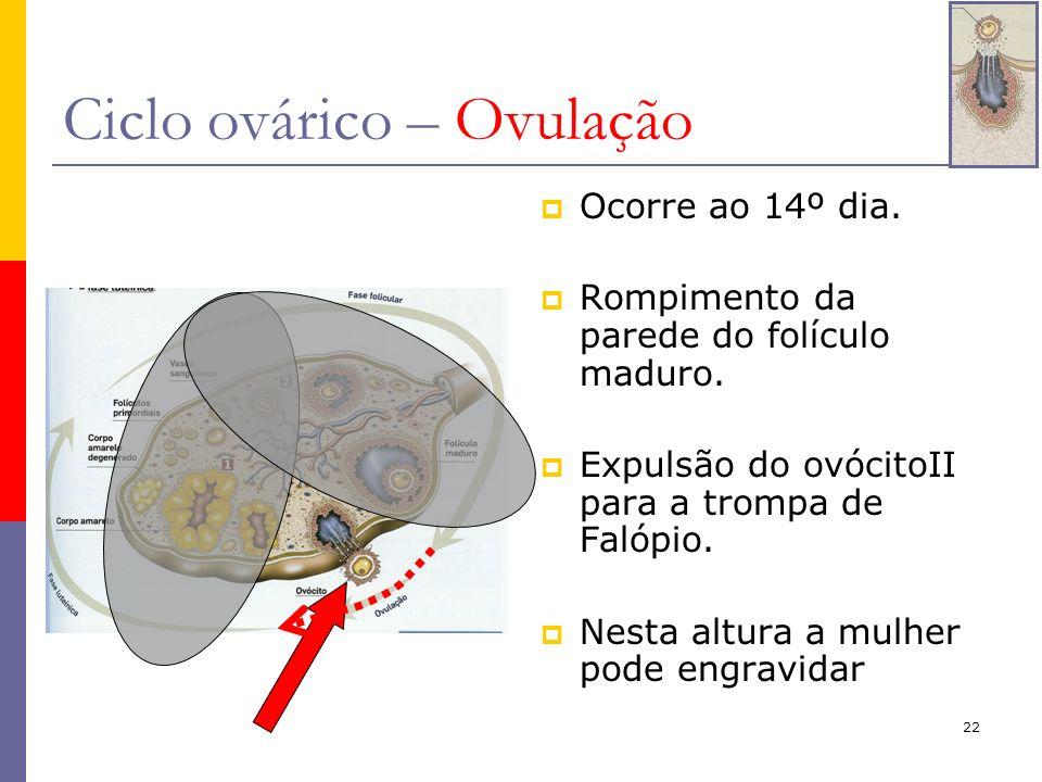 Ciclo ovárico – Ovulação