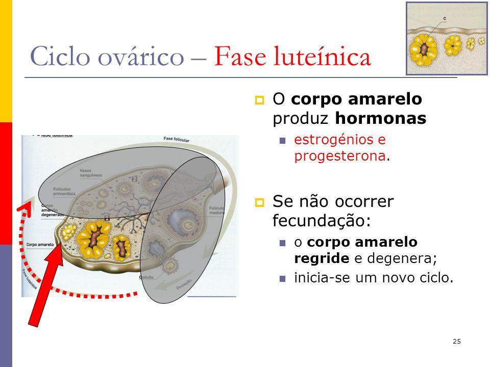 Ciclo ovárico – Fase luteínica