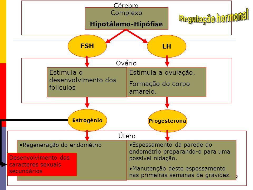 Regulação hormonal Cérebro Complexo Hipotálamo-Hipófise FSH LH Ovário