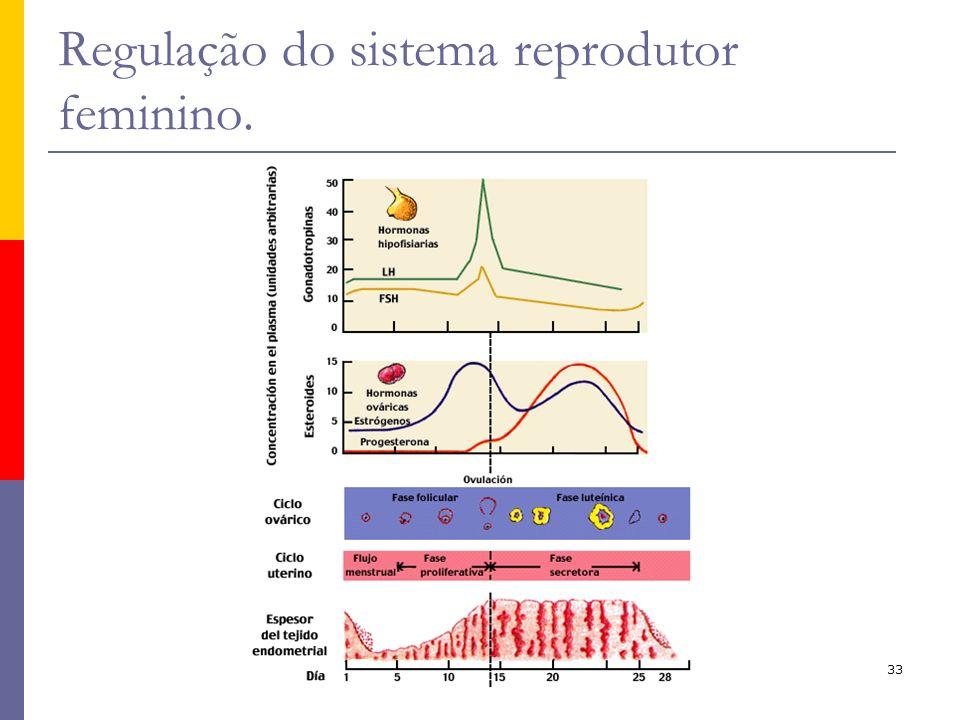 Regulação do sistema reprodutor feminino.
