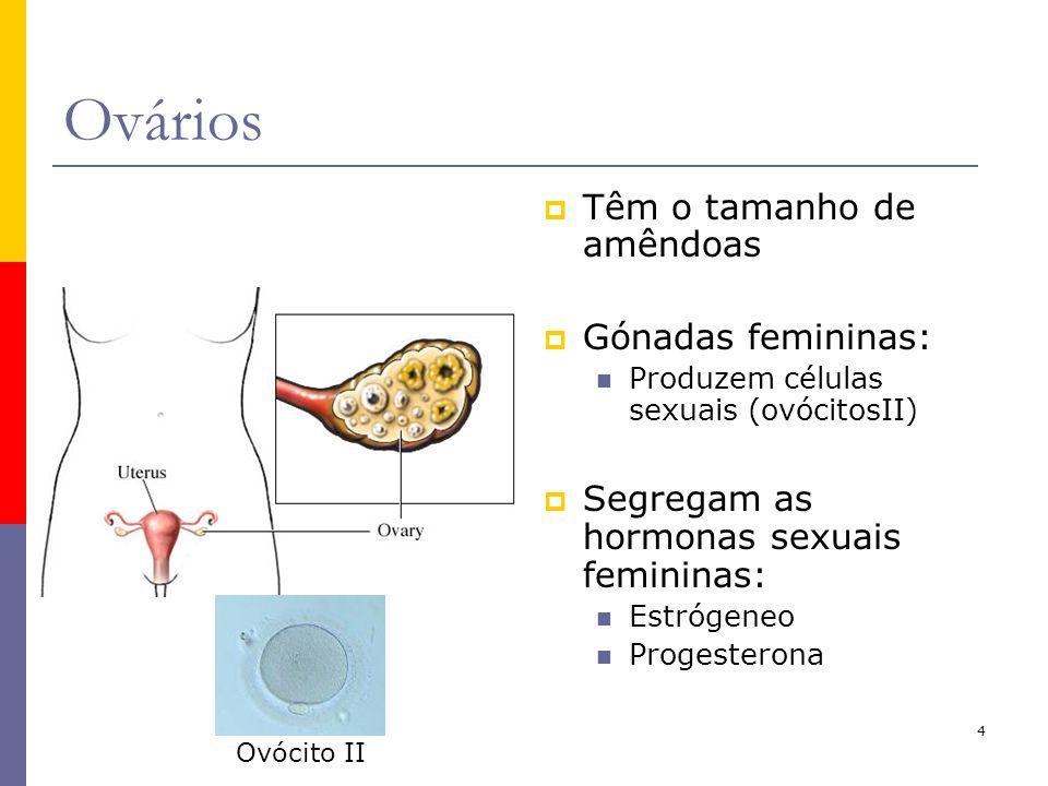 Ovários Têm o tamanho de amêndoas Gónadas femininas: