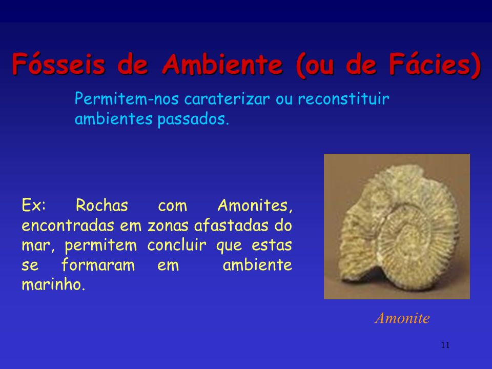 Fósseis de Ambiente (ou de Fácies)