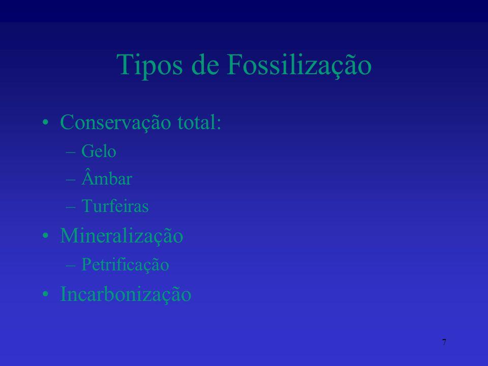 Tipos de Fossilização Conservação total: Mineralização Incarbonização
