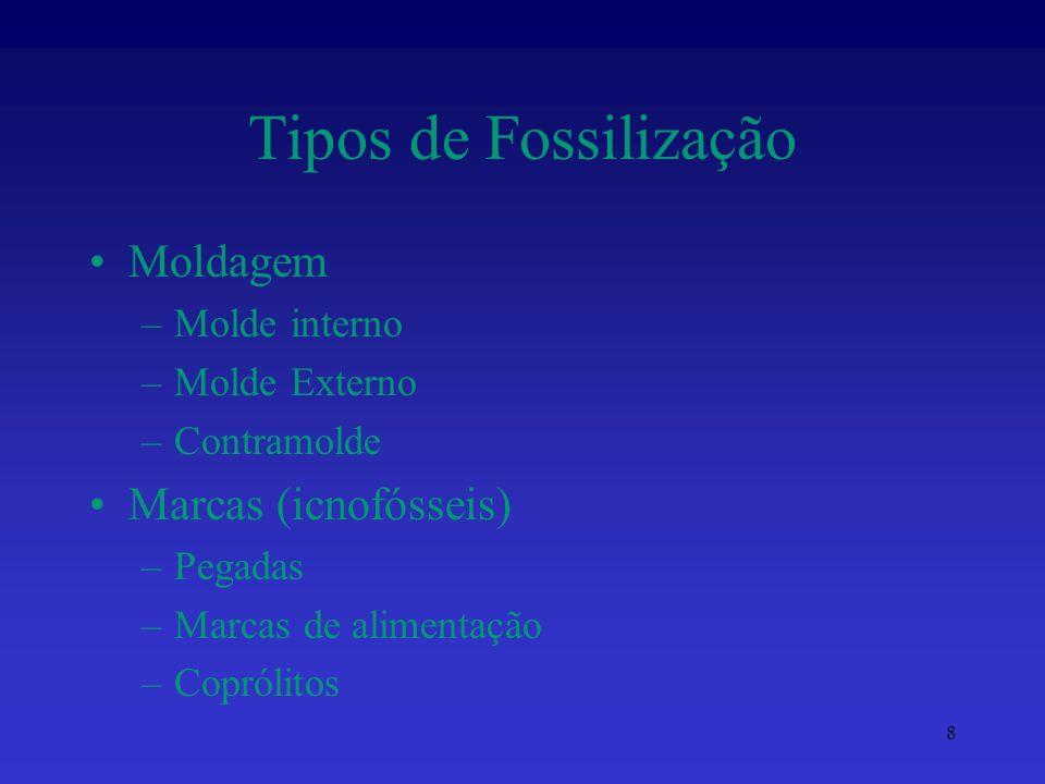 Tipos de Fossilização Moldagem Marcas (icnofósseis) Molde interno