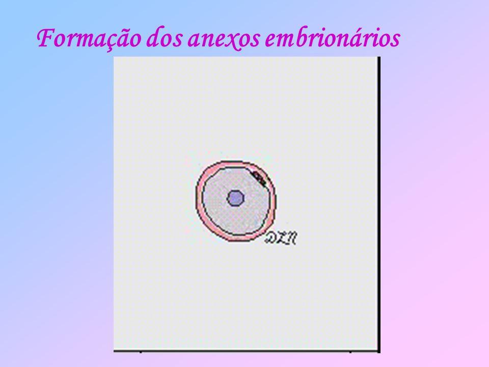 Formação dos anexos embrionários