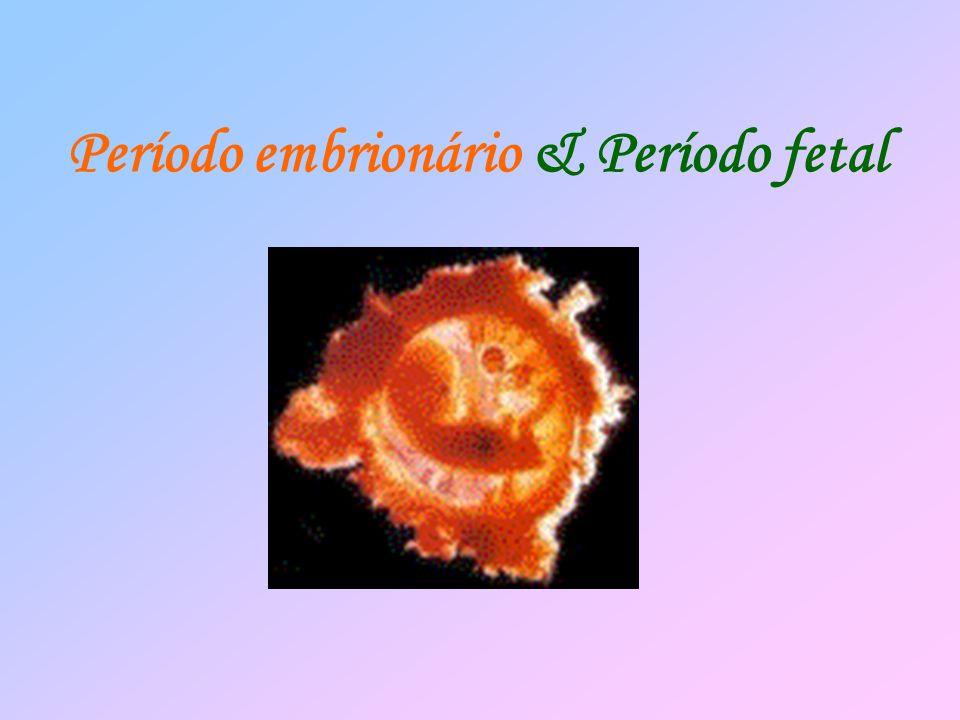 Período embrionário & Período fetal