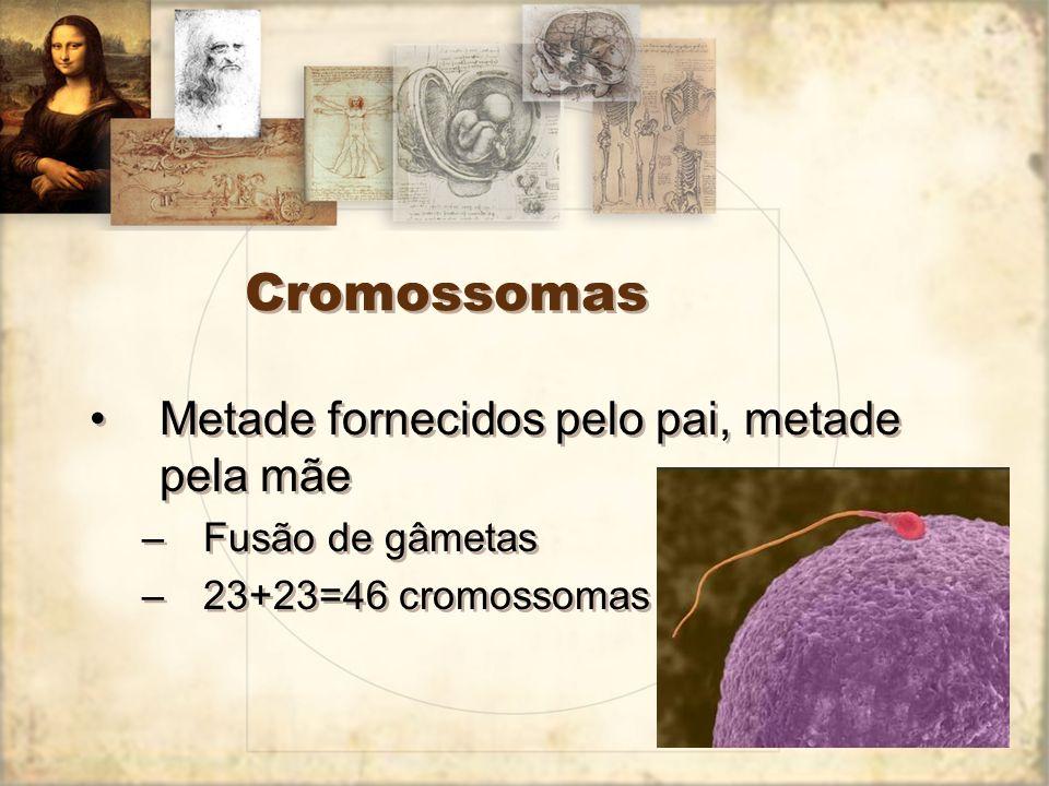 Cromossomas Metade fornecidos pelo pai, metade pela mãe