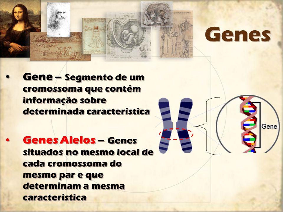 Genes Gene – Segmento de um cromossoma que contém informação sobre determinada característica.