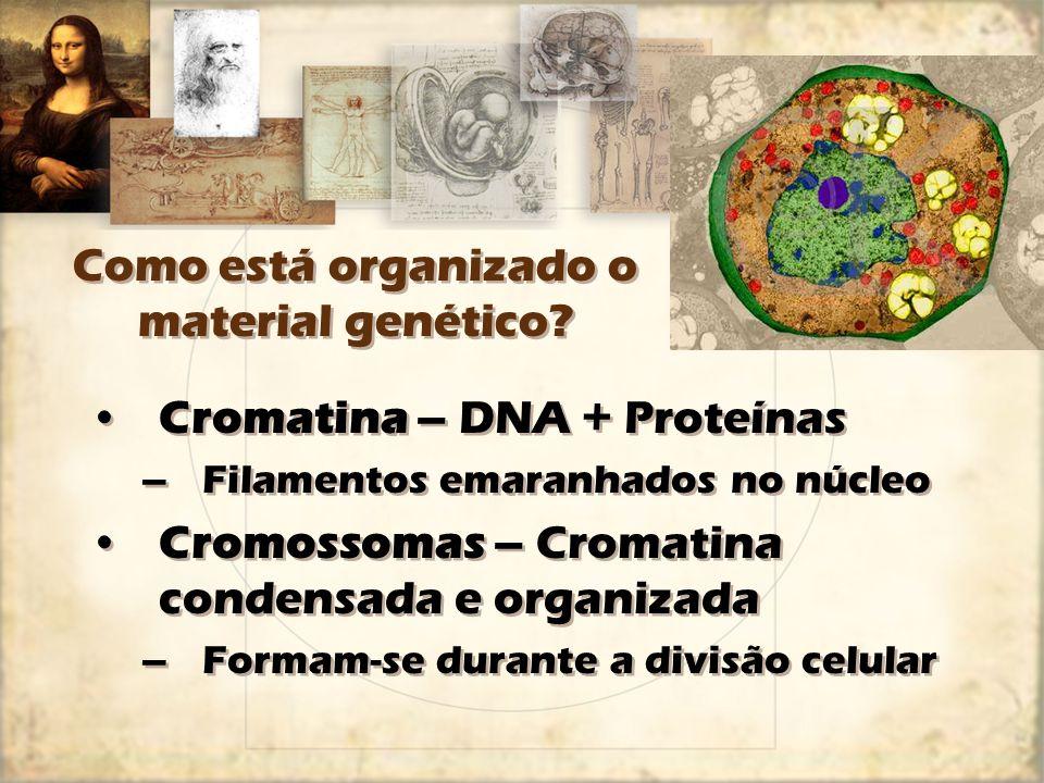 Como está organizado o material genético