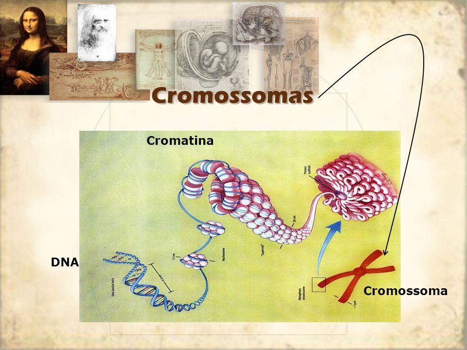 Cromossomas Cromatina DNA Cromossoma