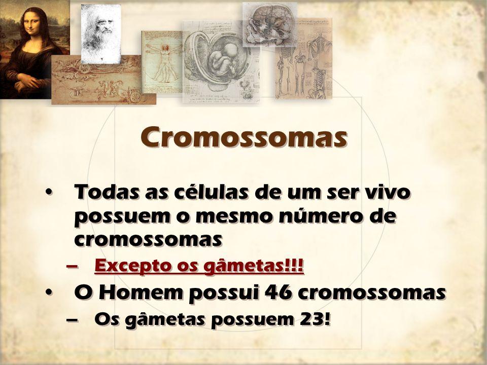 Cromossomas Todas as células de um ser vivo possuem o mesmo número de cromossomas. Excepto os gâmetas!!!
