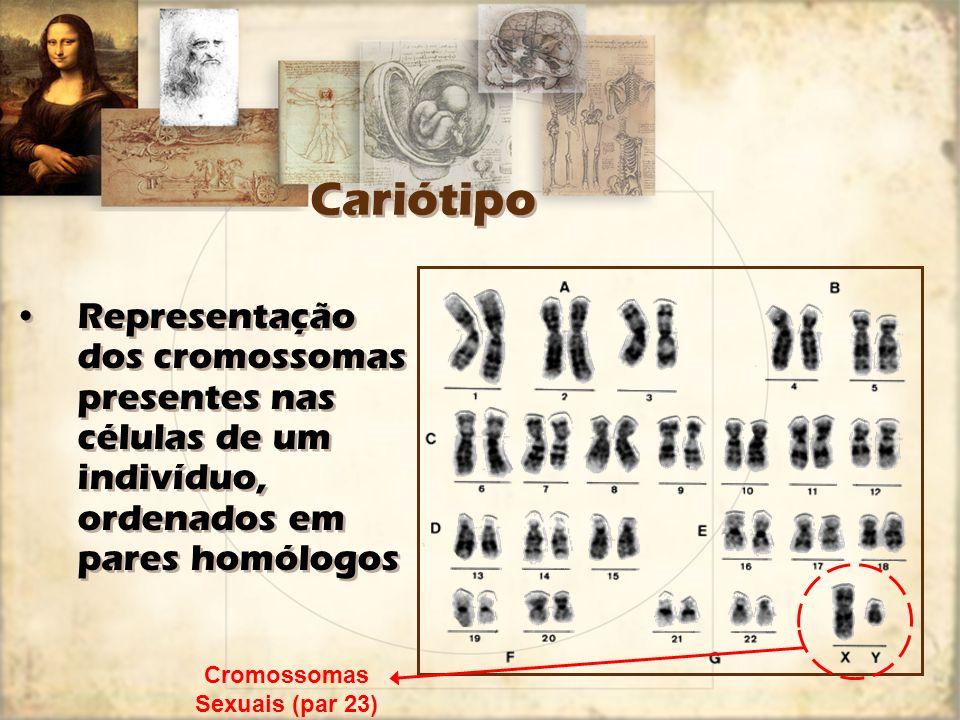 Cromossomas Sexuais (par 23)
