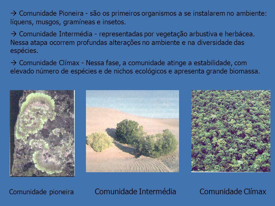  Comunidade Pioneira - são os primeiros organismos a se instalarem no ambiente: líquens, musgos, gramíneas e insetos.