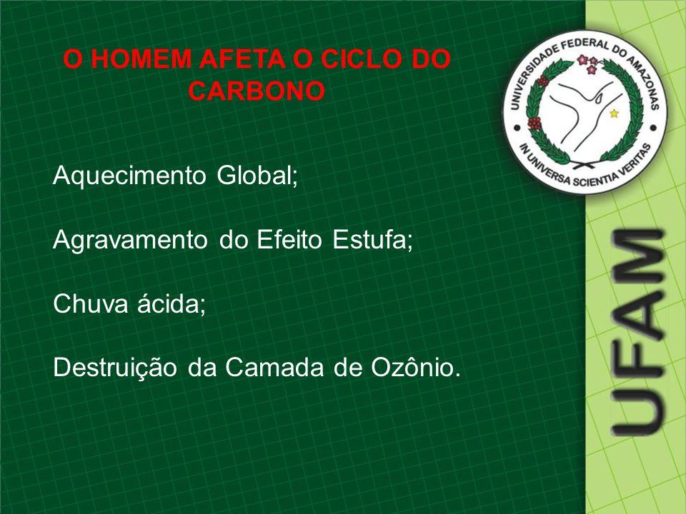 O HOMEM AFETA O CICLO DO CARBONO