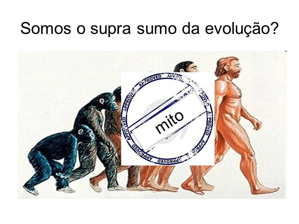 Somos o supra sumo da evolução