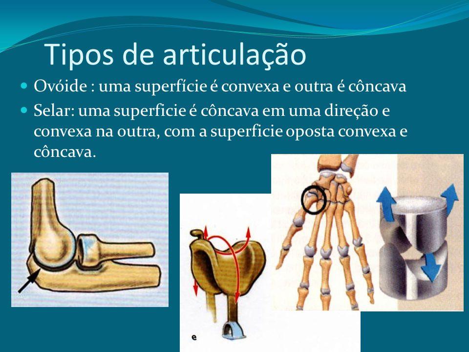Tipos de articulação Ovóide : uma superfície é convexa e outra é côncava.