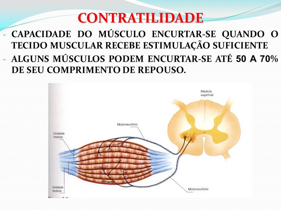 CONTRATILIDADE CAPACIDADE DO MÚSCULO ENCURTAR-SE QUANDO O TECIDO MUSCULAR RECEBE ESTIMULAÇÃO SUFICIENTE.