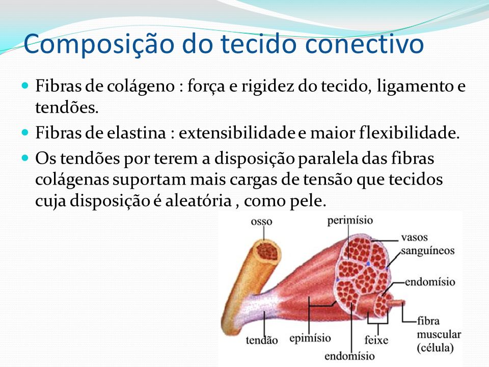 Composição do tecido conectivo