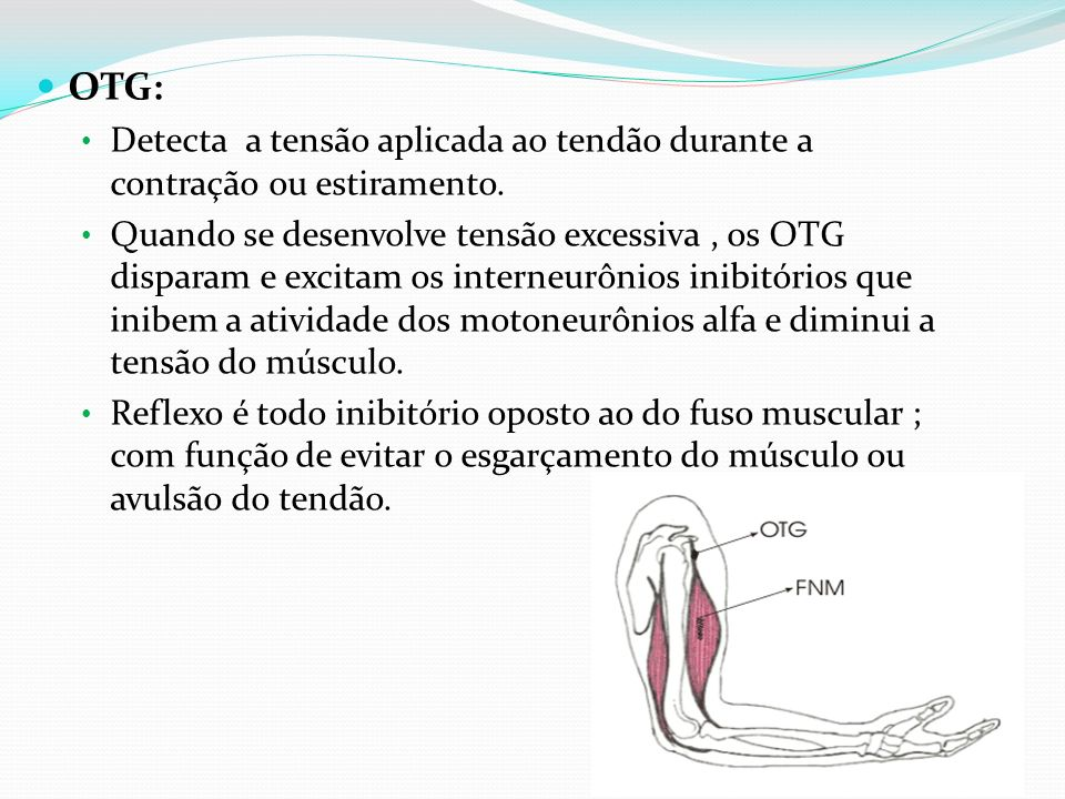 OTG: Detecta a tensão aplicada ao tendão durante a contração ou estiramento.