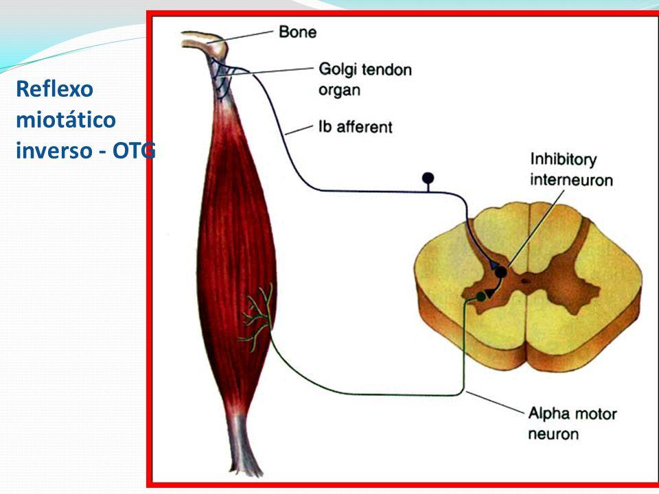 Reflexo miotático inverso - OTG