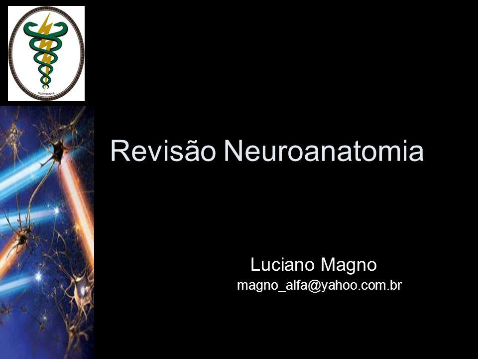 Revisão Neuroanatomia