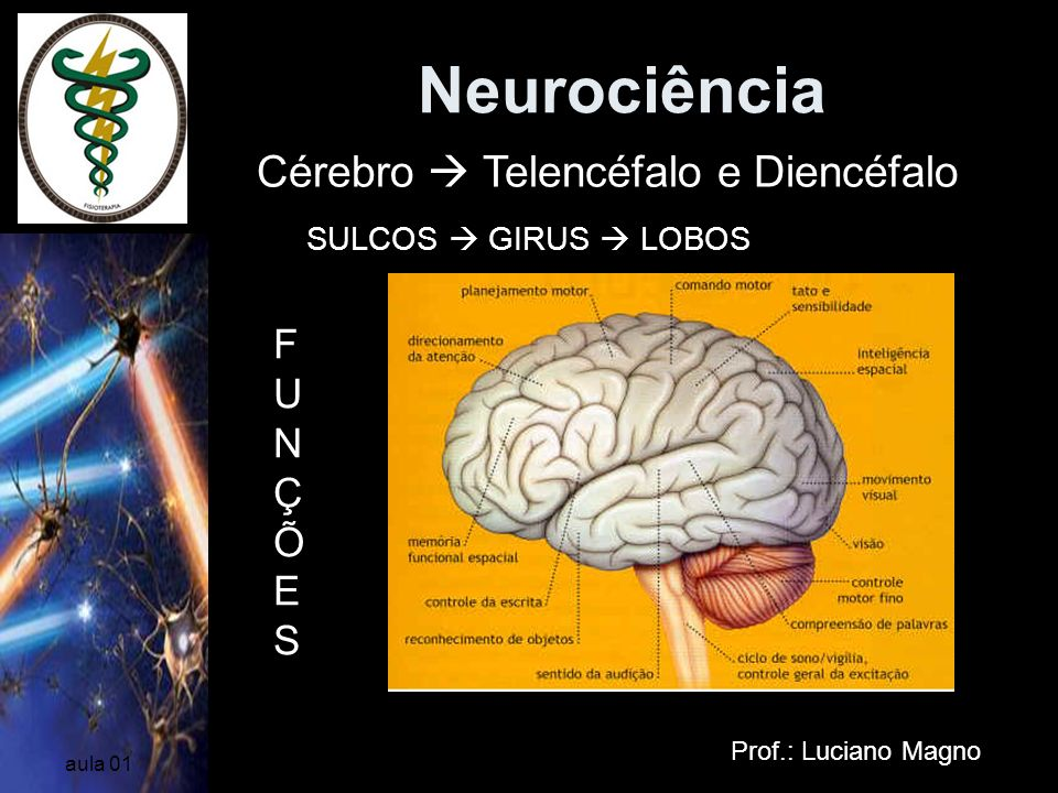 Neurociência Cérebro  Telencéfalo e Diencéfalo FUNÇÕES
