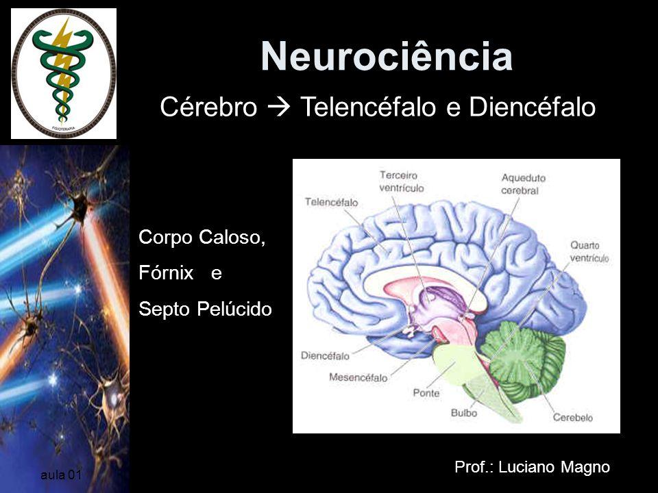 Neurociência Cérebro  Telencéfalo e Diencéfalo Corpo Caloso, Fórnix e