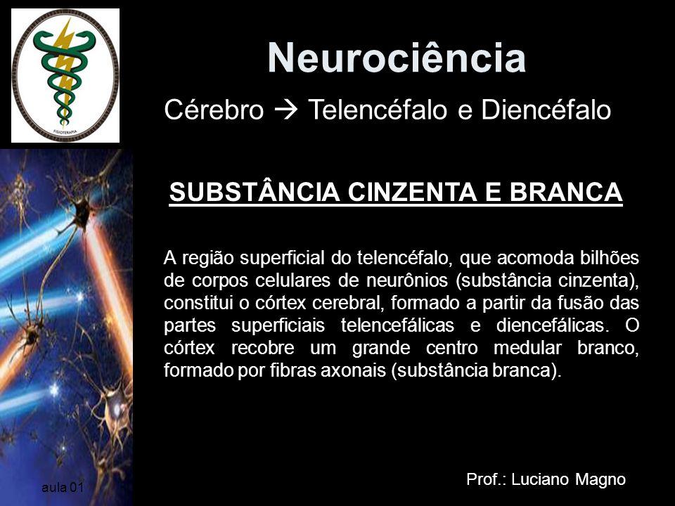 Neurociência Cérebro  Telencéfalo e Diencéfalo