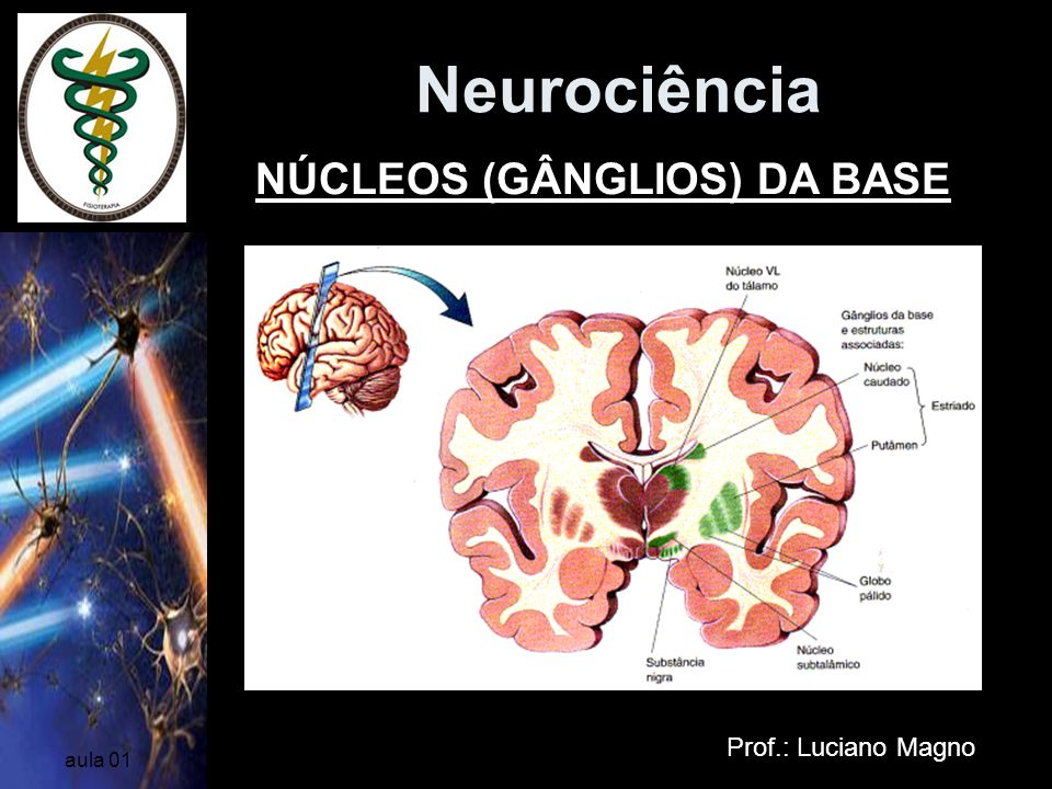 Neurociência NÚCLEOS (GÂNGLIOS) DA BASE Prof.: Luciano Magno aula 01