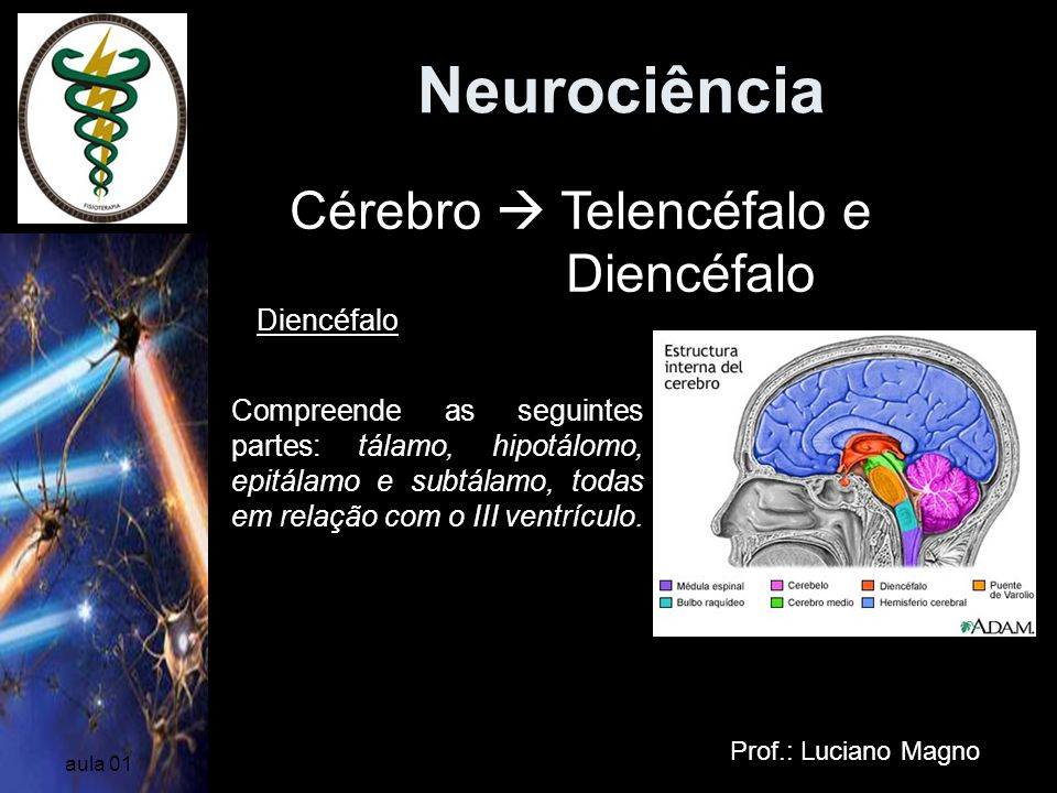 Neurociência Cérebro  Telencéfalo e Diencéfalo Diencéfalo