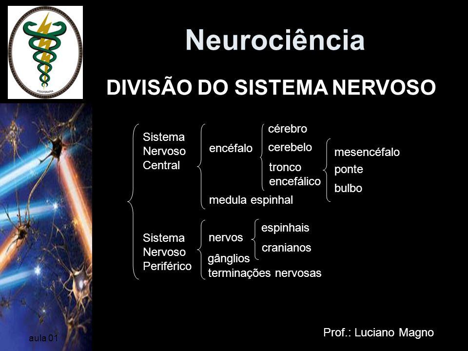 Neurociência DIVISÃO DO SISTEMA NERVOSO cérebro